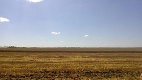 麦田 在领域的夏天 农业在库班河州农业大学 免版税库存图片