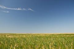 黑麦的域 库存图片