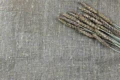 黑麦的耳朵花束在帆布的 免版税库存图片