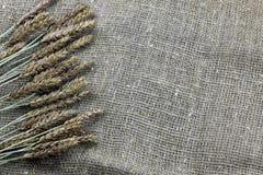 黑麦的耳朵花束在帆布的 图库摄影