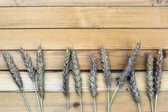 黑麦的耳朵花束在帆布的 免版税库存照片