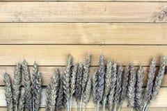 黑麦的耳朵花束在帆布的 库存照片