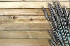 黑麦的耳朵花束在帆布的 库存图片