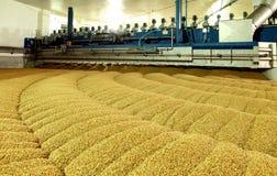 麦芽的工业生产 一个巨大的大桶 免版税库存照片