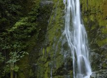 麦迪逊小河秋天,奥林匹克国家公园,华盛顿 免版税库存图片
