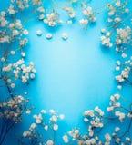 麦,婴孩` s呼吸在蓝色背景开花 白花框架,顶视图 库存照片