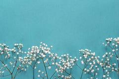麦从上面开花在蓝色背景的框架 平的位置 库存照片
