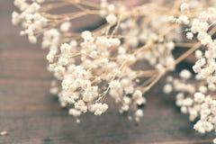 麦& x28; Baby& x27; s呼吸flowers& x29;特写镜头 免版税库存图片