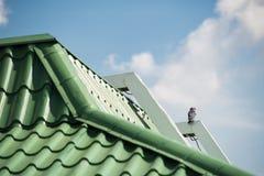麻雀坐一个绿色瓦屋顶 库存图片