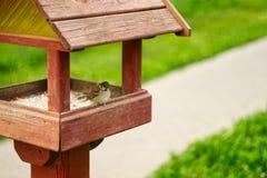 麻雀坐鸟饲养者在公园 免版税图库摄影