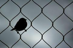 麻雀 免版税图库摄影