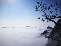 黄山的雾凇 The morning of Huang Mountain royalty free stock photo