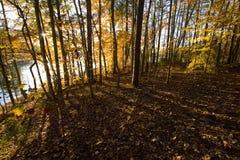 黄昏发光通过树和熔铸的锋利的阴影的太阳 免版税库存照片
