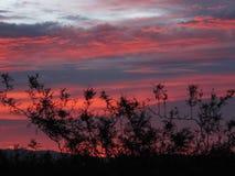 黄昏在克拉克县沼泽地公园,拉斯维加斯,内华达 免版税库存图片