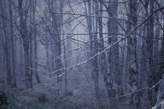 黄昏的有雾的森林 库存照片