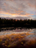 黄昏的Forest湖 库存照片