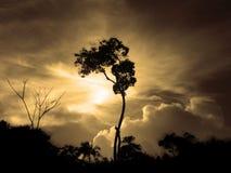 黄昏结构树 库存照片