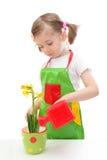 黄水仙女孩浇灌的一点 库存图片