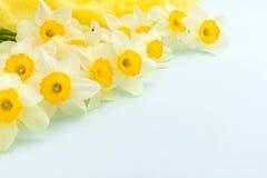 黄水仙春天开花与在蓝色淡色背景的黄色纺织品装饰与拷贝空间 免版税库存图片
