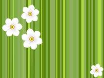 黄水仙花 库存图片