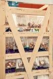 黄水仙,郁金香电灯泡在烘干的一个木机架垂悬了在清洗以后 在花店的陈列室 自然本底种植 免版税库存照片