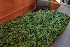 黄瓜在加工设备中 库存图片