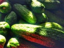 黄瓜新绿色 库存图片