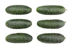 黄瓜 免版税库存照片