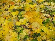 ?? 黄绿色在地面上的秋叶 免版税图库摄影
