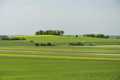 黄绿色草甸和树丛 免版税库存照片