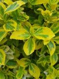 黄绿,浅绿色的叶子的构成 免版税库存照片
