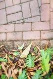 黄色下落的叶子和绿色生活叶子在边路铺有灰色具体铺路石顶视图 库存照片