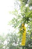 黄色丝带 免版税库存图片
