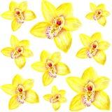 黄色兰花,打印的样式花  画开花的河结构树水彩绕的银行 免版税库存图片