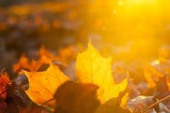 黄色划分为的叶子 库存图片
