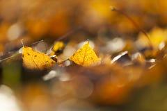 黄色划分为的叶子 图库摄影