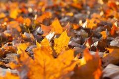 黄色划分为的叶子 免版税库存图片