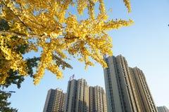 黄色叶子和大厦在秋天 库存照片