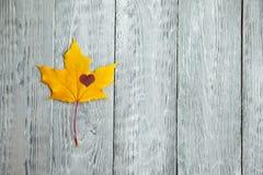 黄色叶子和心脏在灰色木背景 免版税库存图片