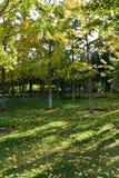 黄色叶子和草 免版税库存照片
