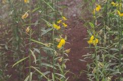 黄色叶子是绿色叶子是自然地美丽的 免版税库存图片