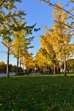 黄色叶子街道 免版税图库摄影