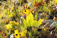 黄色叶子,秋天 免版税库存图片