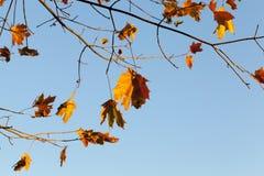黄色叶子,秋天 库存图片
