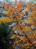 黄色叶子 图库摄影