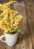 黄色含羞草分支在杯子的在委员会背景  库存图片