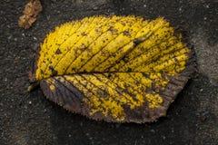 黄色和橙色的唯一叶子关闭在秋天 库存图片