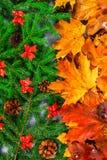 黄色和橙色秋叶把变成绿色冷杉分支与锥体和圣诞节装饰 秋天的变动为冬天 免版税库存图片