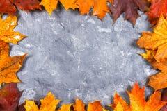 黄色和橙色秋天槭树框架在灰色黑暗的混凝土离开 文本的空的安排 顶视图 库存照片