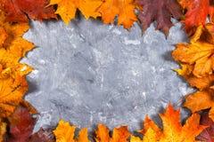 黄色和橙色秋天槭树框架在灰色黑暗的混凝土离开 文本的空的安排 顶视图 库存图片